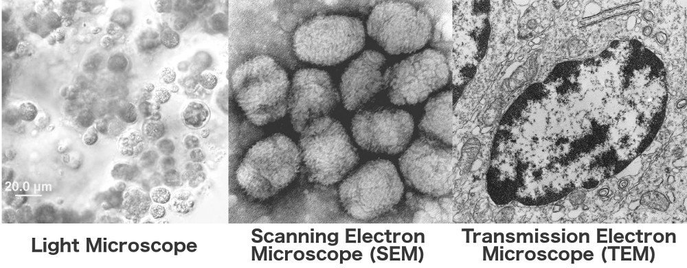Light microsope scanning electron microsope transmission electron microscope
