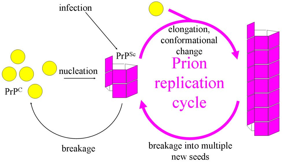 Prion Replication