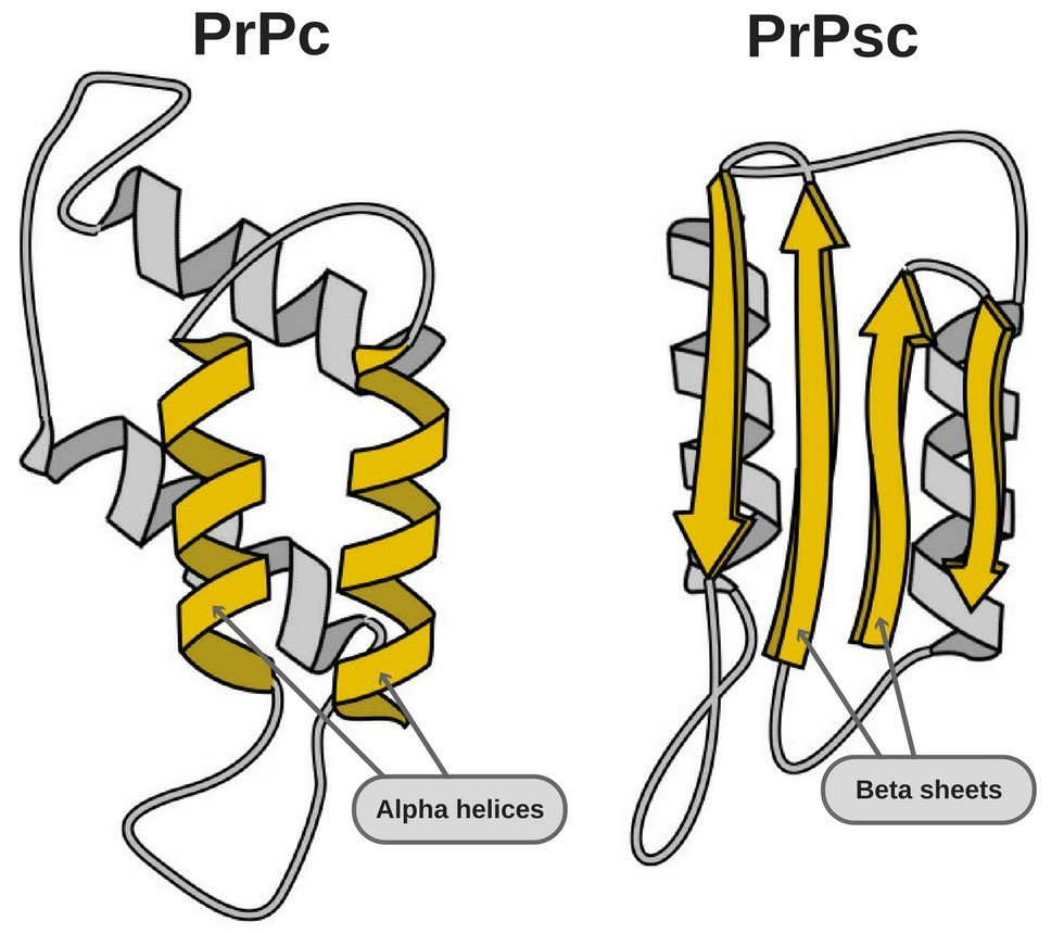 Prion Structure PrPc & PrPsc.