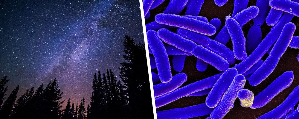 Stars milky way in night and E. coli Bacteria
