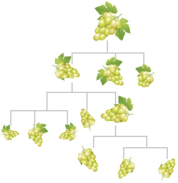 Descendant grapes