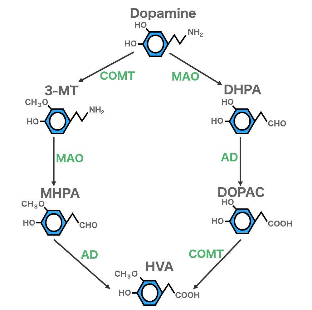 Dopamine 3mt dhpa mhpa dopac hva