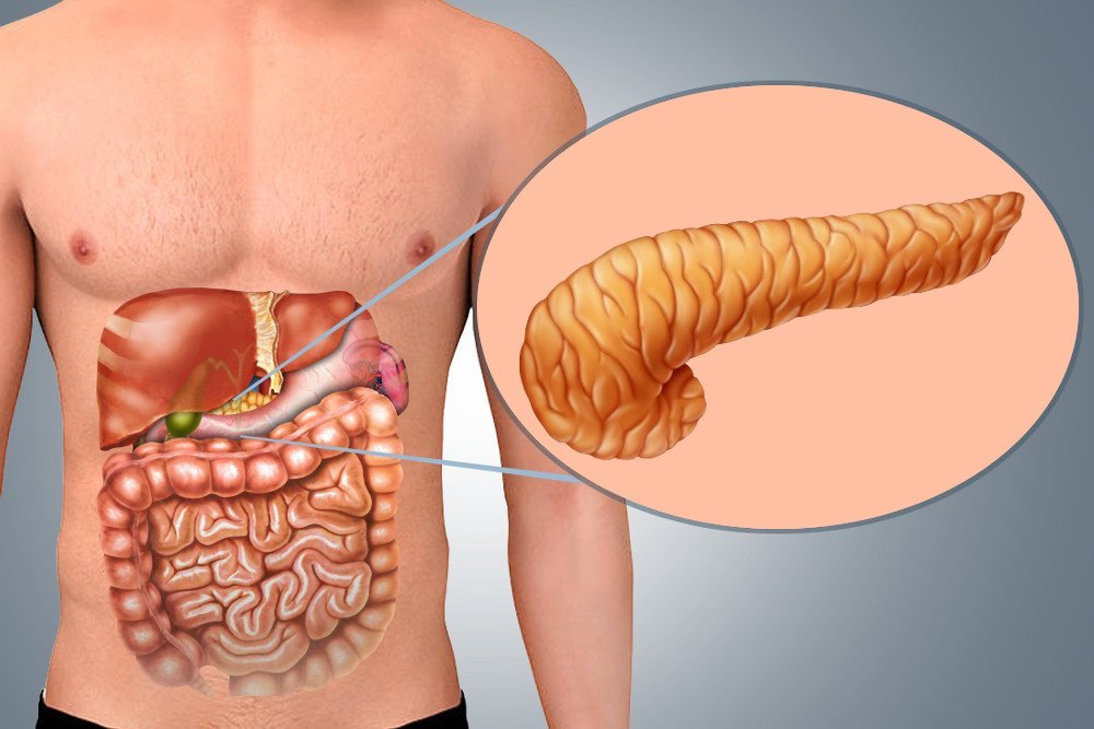 Pancreas in the body
