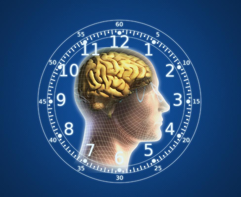 The human body has an internal clock