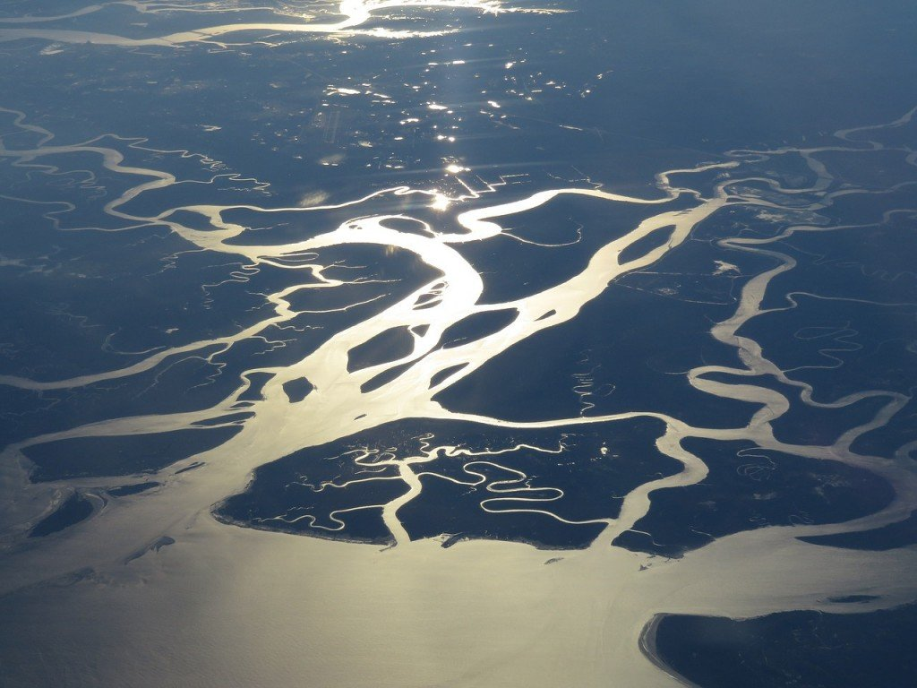 River delta tree water flow