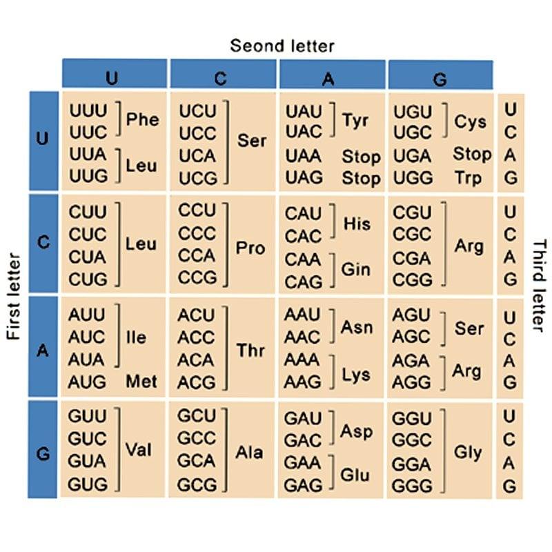 chart pu3