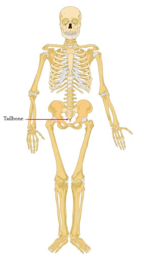 tailbone