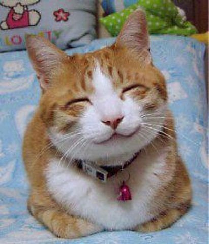 So happy smiling cat