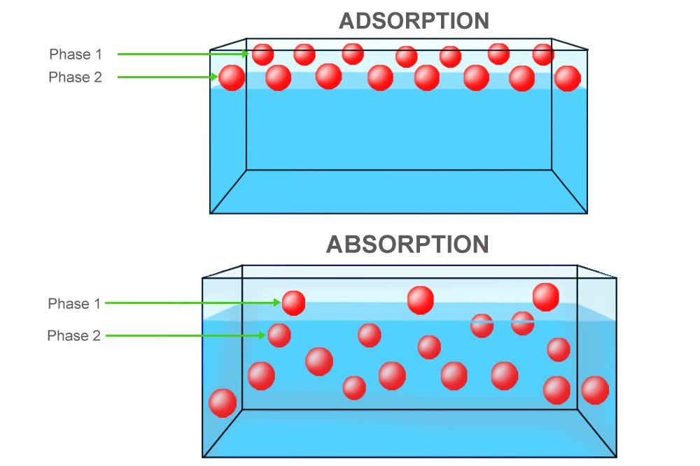 absord vs adsorb