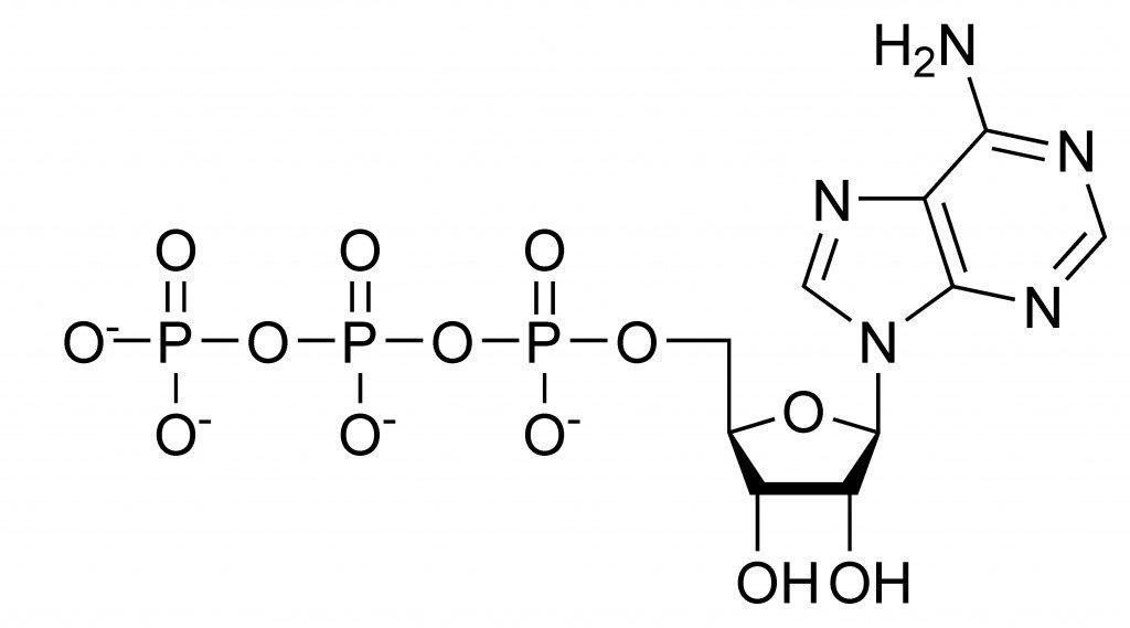 ATP_chemical_structure