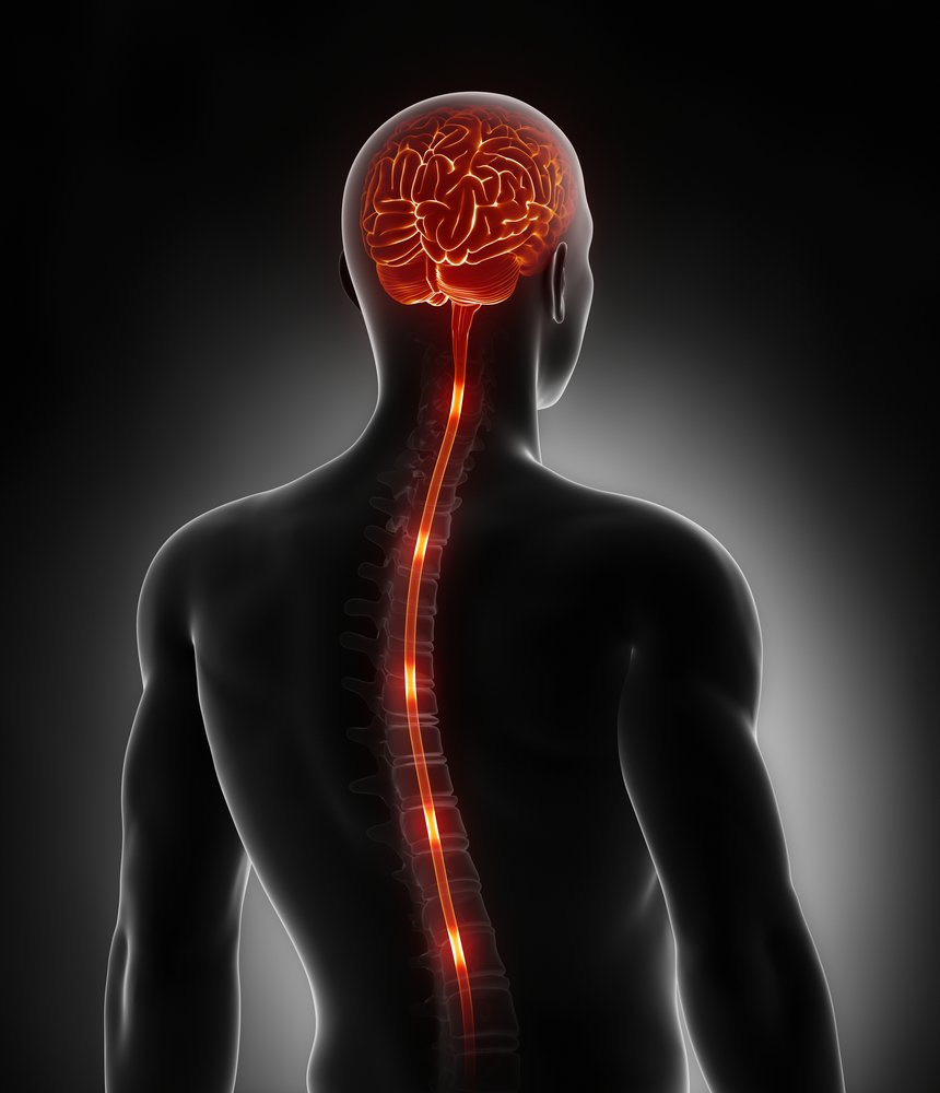 Spinal cord nerve energy impulses into brain(CLIPAREA )s