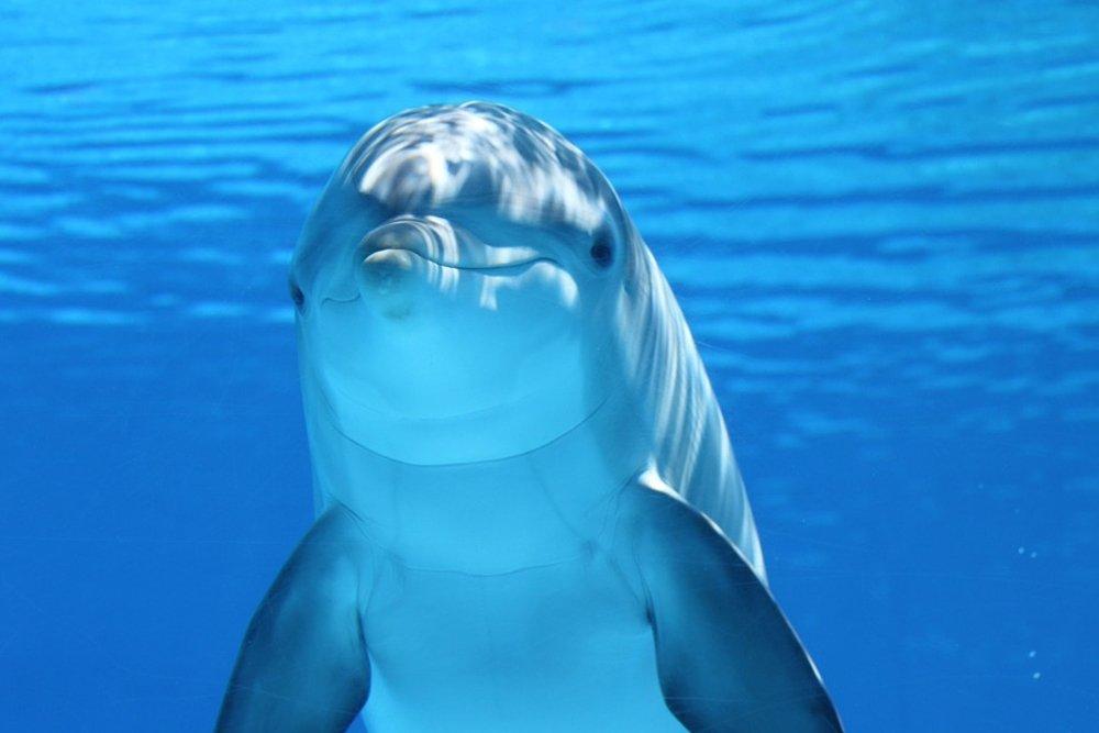 dolphin mammals