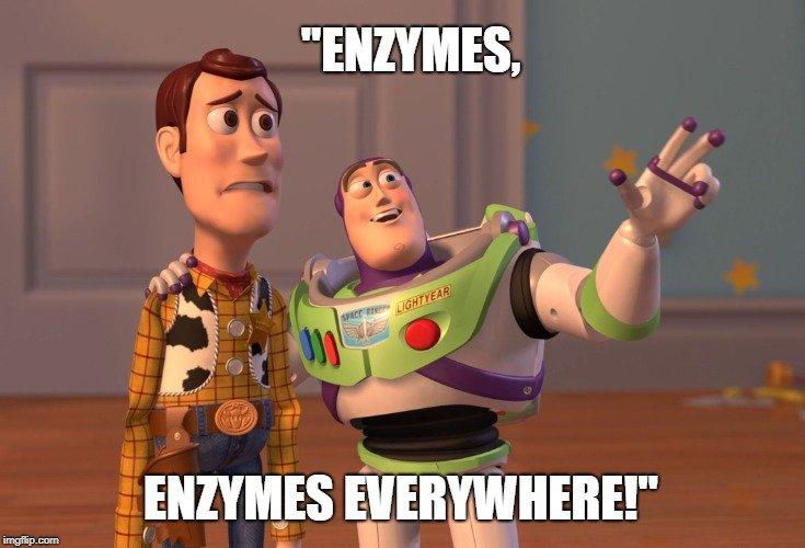 enzymes everywhere!