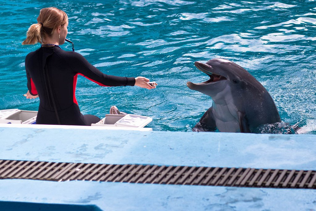 girl talking with dolphin