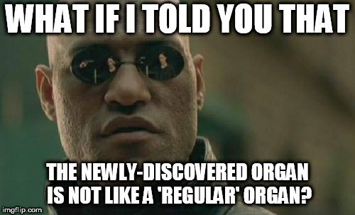 WHAT IF I TOLD YOU THAT; THE NEWLY-DISCOVERED ORGAN IS NOT LIKE A 'REGULAR' ORGAN meme