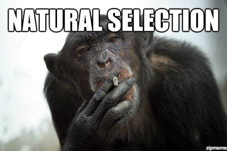 natural selection meme