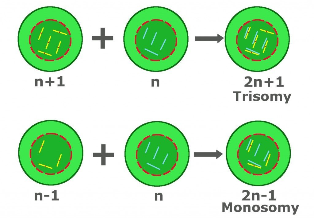 trisomy and monosomy