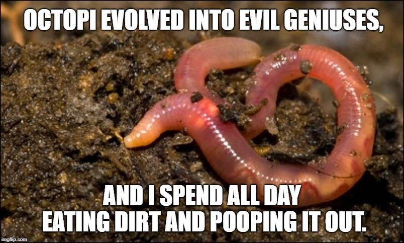 Octopi evolved into evil geniuses meme