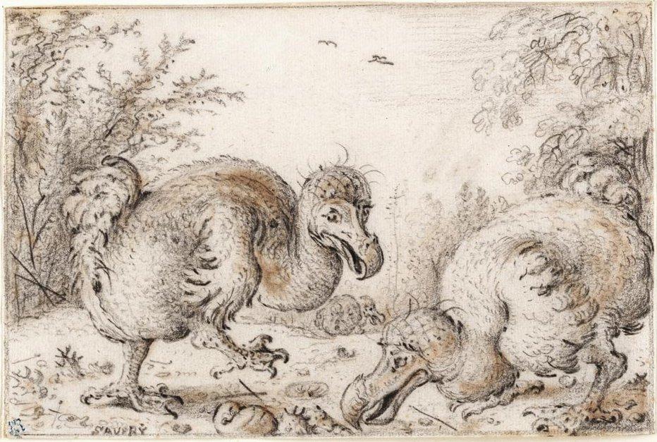 , Why Did the Dodo Bird Go Extinct?, Science ABC, Science ABC
