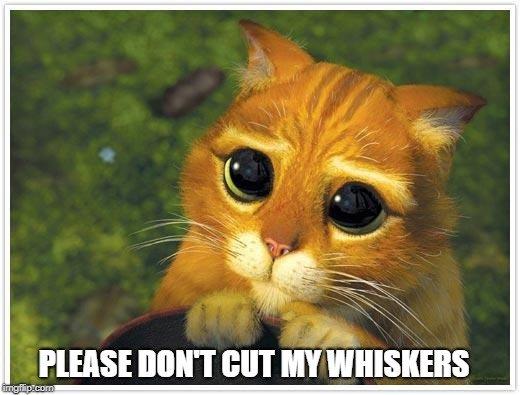 dont cut my whisker meme