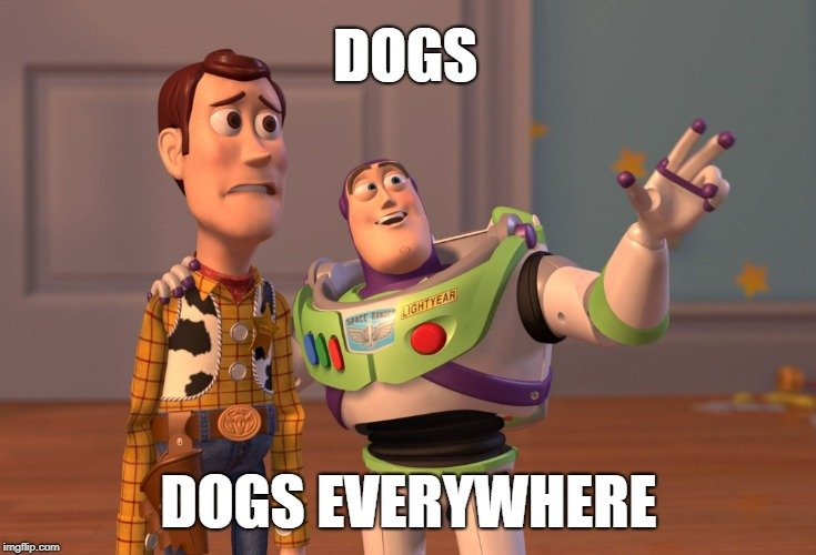 DOGS; DOGS EVERYWHERE meme