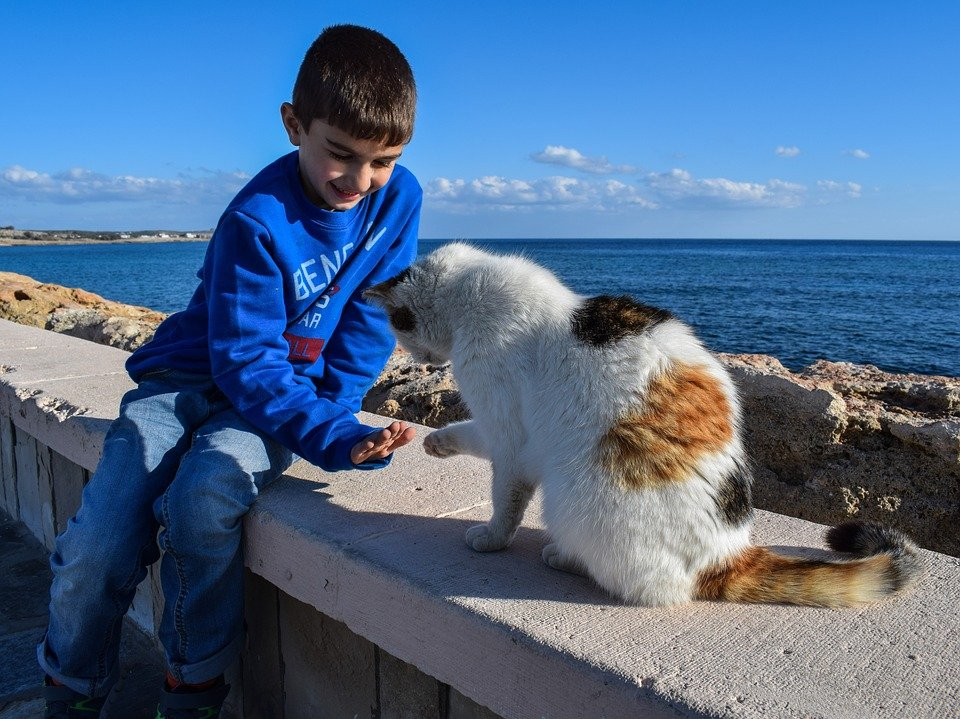 Kid Playing Stray Communication Boy Cat