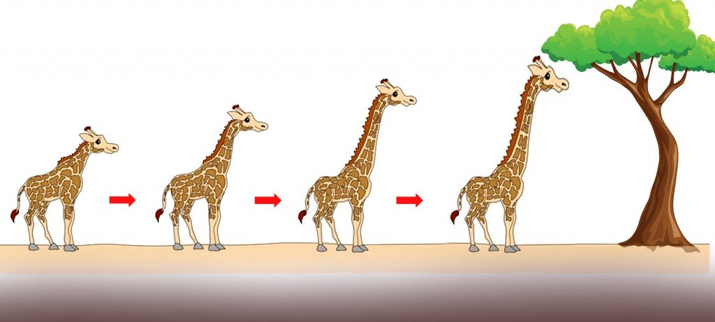 , Why Do Giraffes Have Long Necks?, Science ABC, Science ABC