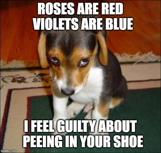 ROSES ARE RED VIOLETS ARE BLUE; I FEEL GUILTY ABOUT PEEING IN YOUR SHOE meme
