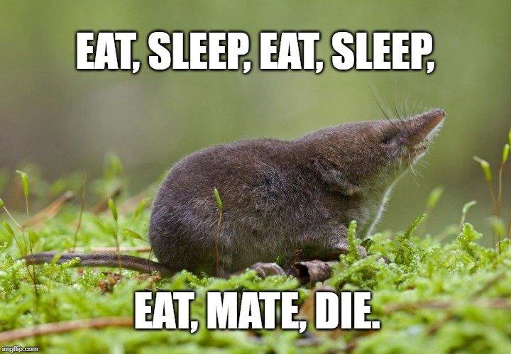 eat, mate, die meme