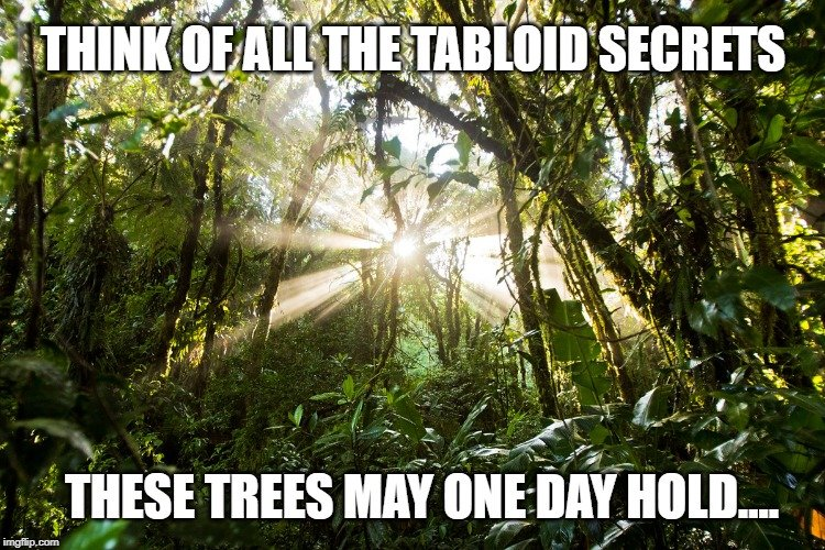 these tree one day hold meme