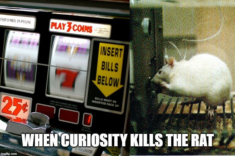 when curiosity kills the rat meme