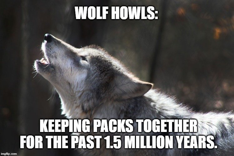 Keeping packs together for the past 1.5 million years meme