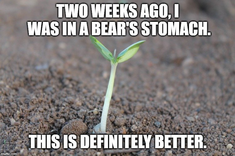 Two weeks ago, I was in a bear's stomach. meme