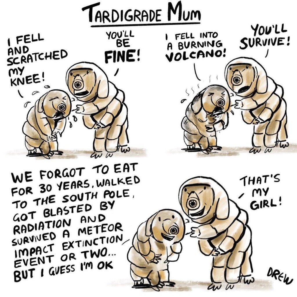 tardigrade meme