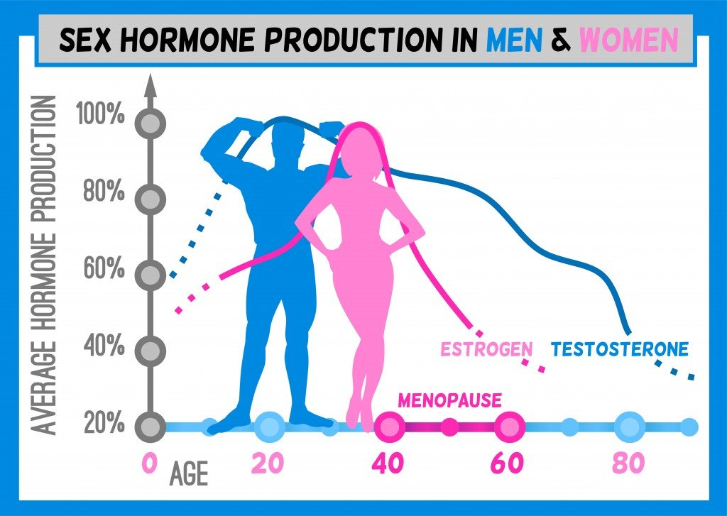 Sex hormone production in men and women. Average percentage from the birth to the age of eighty years. Beautiful vector illustration. Medical infographic useful for an educational poster design.Vector(Double Brain)
