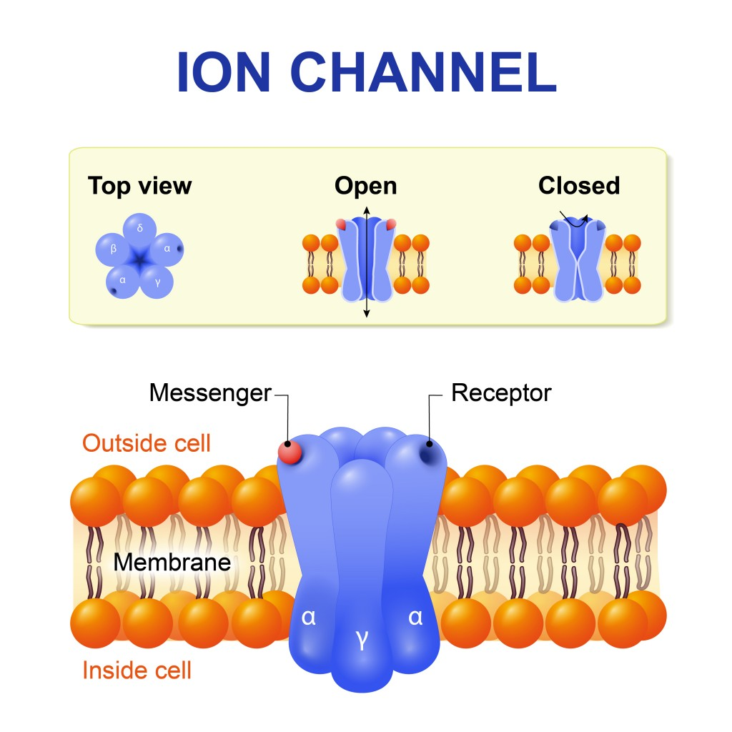 Ion channel. structure of the channel. Vector diagram. - Vector(Designua)s