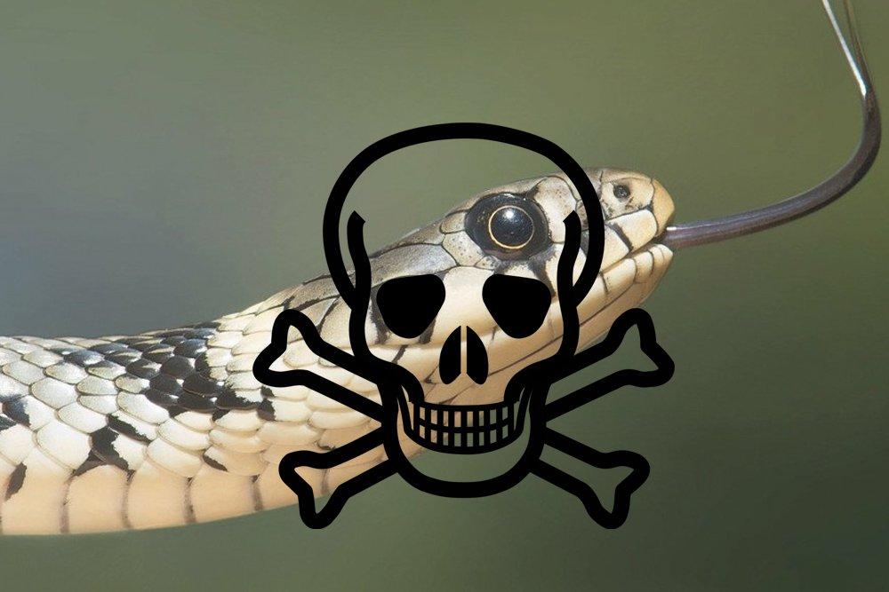 snake danger