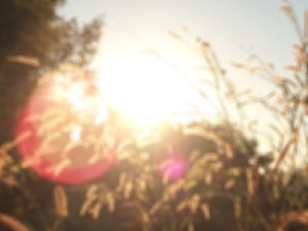 Abstract of grass flower with sunlight and flare lens - Image(peeraporn kwanprom)S