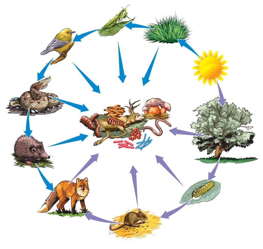 Food chain - Vector( NoPainNoGain)s