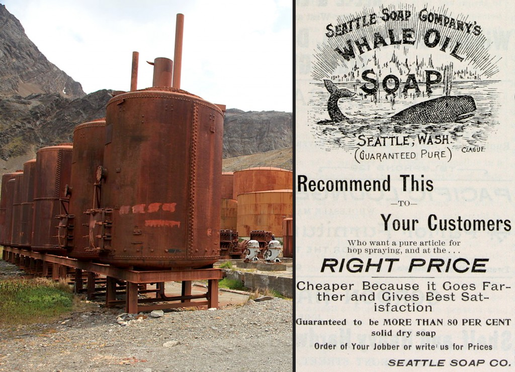 Grytviken Whaling Station, located at South Georgia, stored whale oils for further purification; A whale-oil soap advertisement