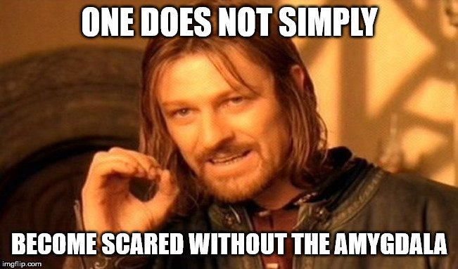 ONE DOES NOT SIMPLY; BECOME SCARED WITHOUT THE AMYGDALA meme