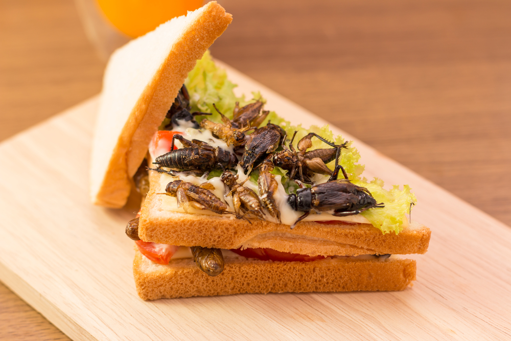 Sandwich made of fried insect meat and mozzarella cheese, mayonnaise and tomato, lettuce with orange juice presented on a wooden board( CK Bangkok Photography)
