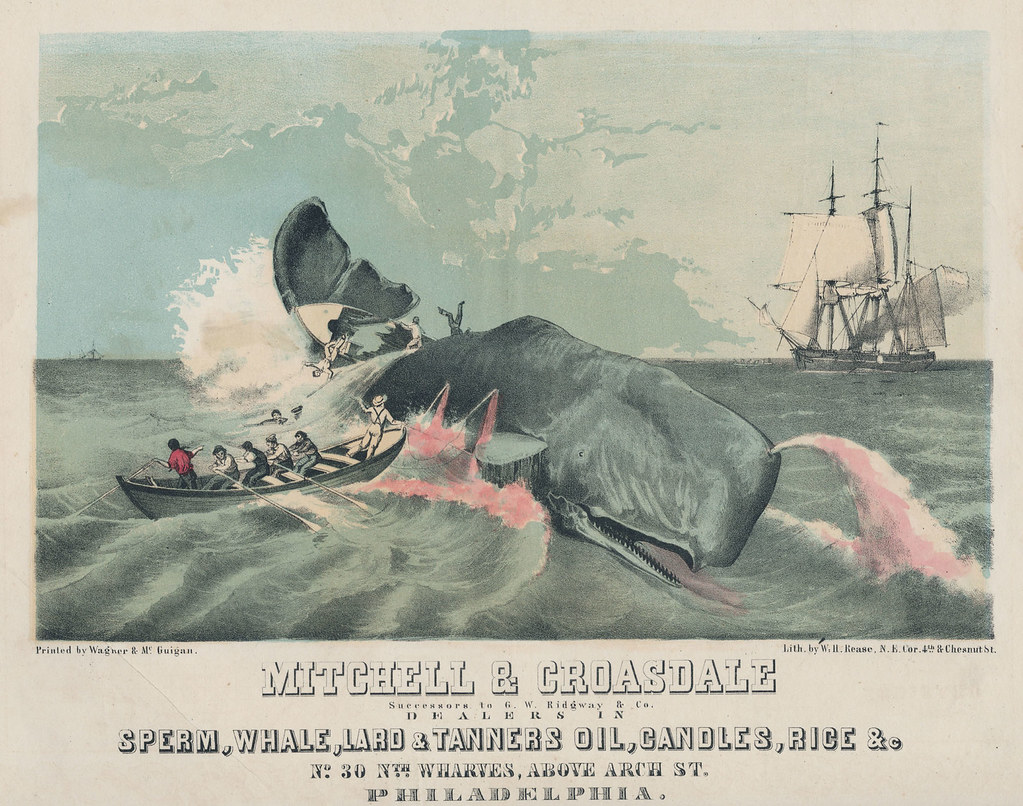 Whale hunting turned into a booming business for fisheries during the Industrial Revolution