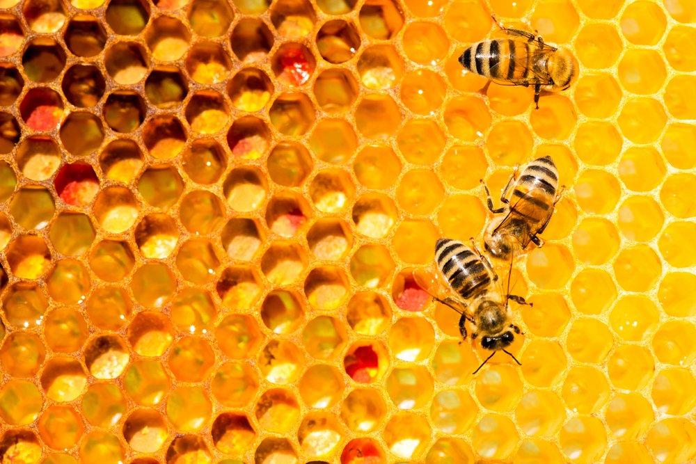 closeup of bees on honeycomb in apiary - selective focus, copy space - Imag( Diyana Dimitrova)s