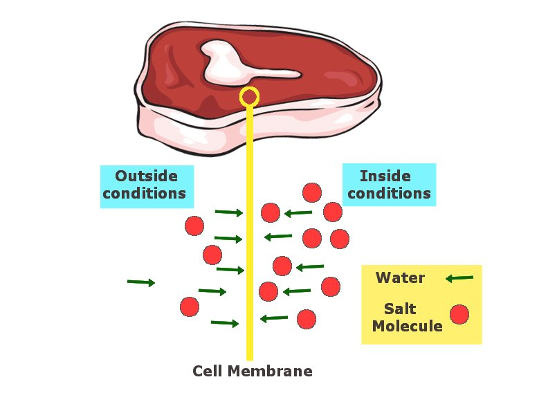 The salt molecules from higher concentration areas move to the side of lower concentration, drawing out water and thus dehydrating the meat.