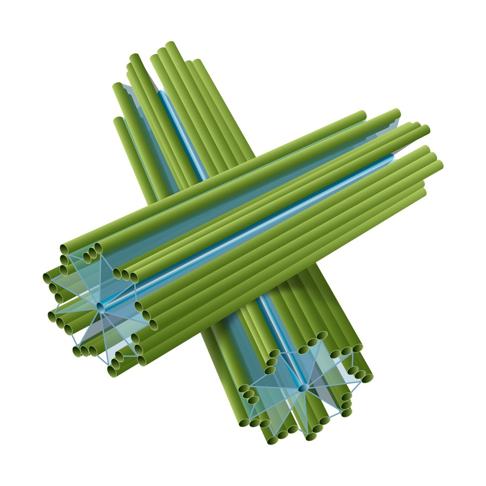 Cell structure of centriole. - Illustration( Aldona Griskeviciene)s