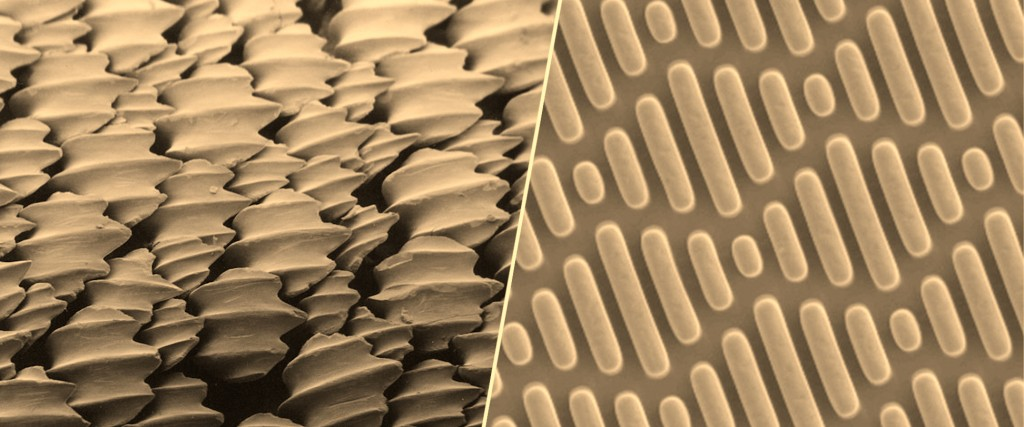 Denticles on sharkskin have inspired many antimicrobial surfaces