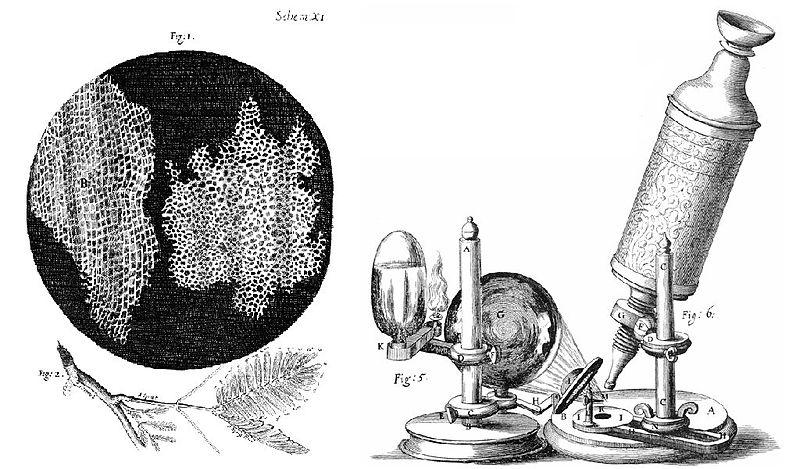Hooke-Microscope-cork