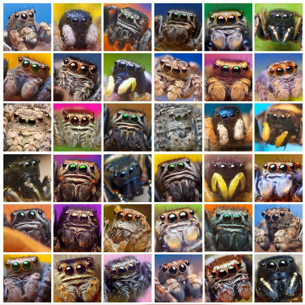 Photo collage of a set photographs of jumping spiders in square frames on the image - Image(Oleg_Serkiz)s
