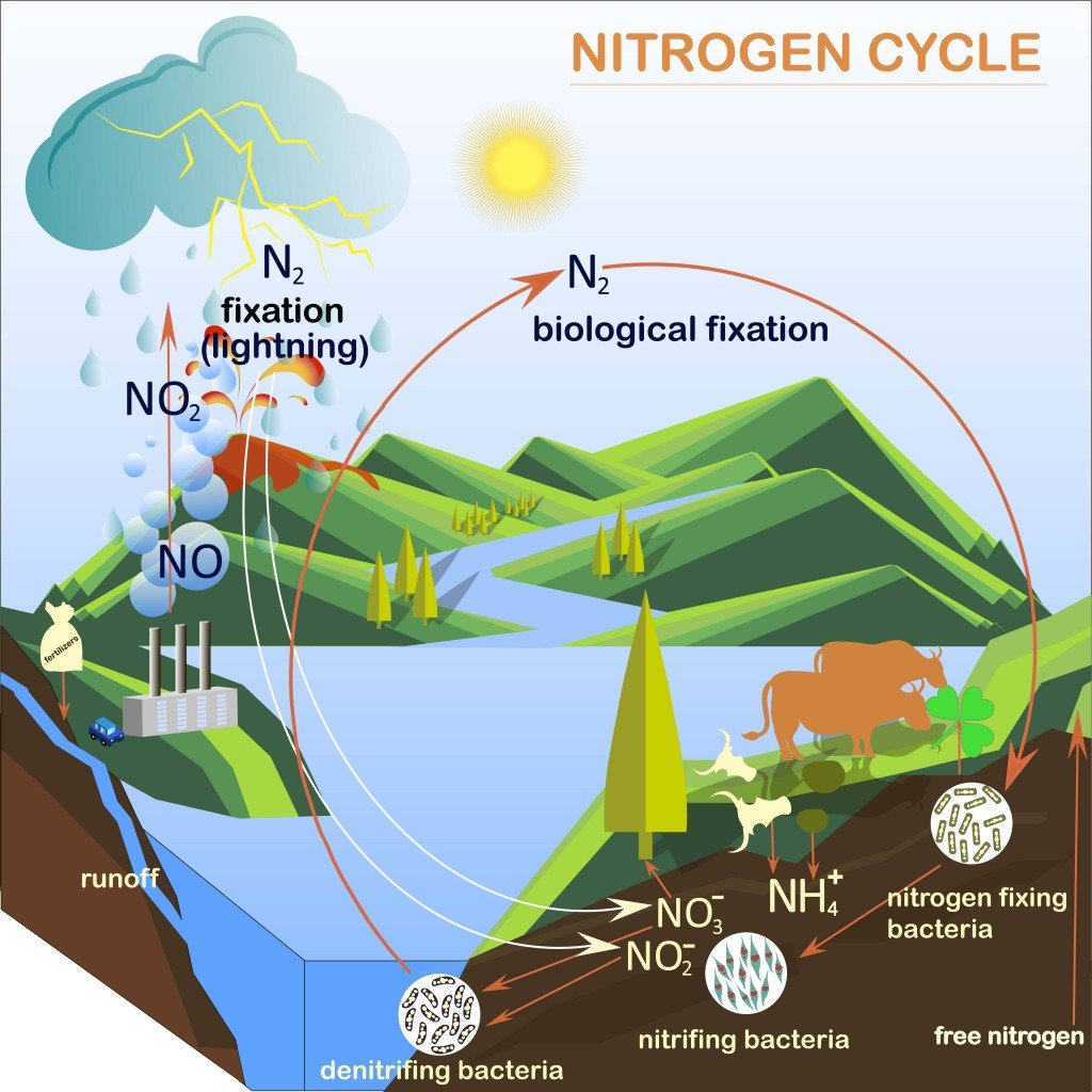 Scheme of the Nitrogen cycle, flats design vector illustration - Vector(danylyukk1)s